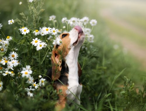 Itching to Make It Stop: Pet Allergies 101