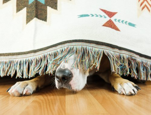 The Sound and the Furry: July Fourth, Fireworks, and Your Pet